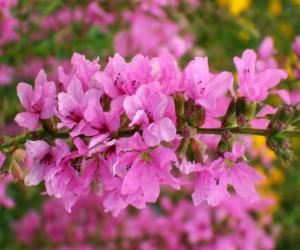 primavera_n