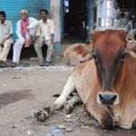 vacas vanarasi