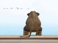 elefante_n